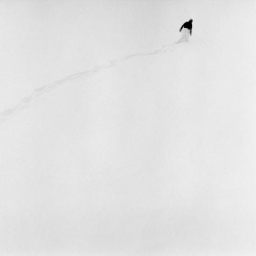 Polar Wander by Heather Boose Weiss