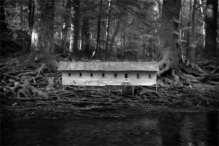 Duckweed Palace by Robert Hite