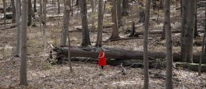 Marking Her Trail by Maria Passarotti