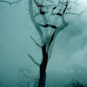 Double Tree 1 by Leah Oates