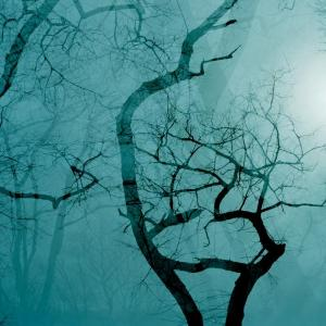 Double Tree 3 by Leah Oates