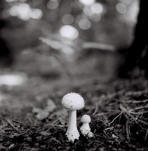 Mushroom Study by Heather Boose Weiss