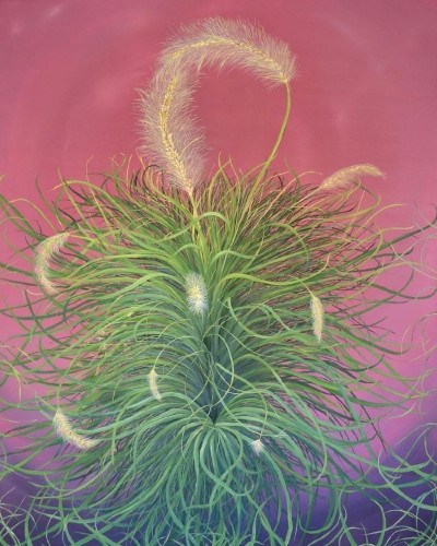 Fountain Grass by Allison Green