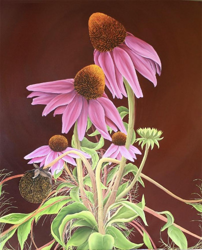 Echinacea by Allison Green
