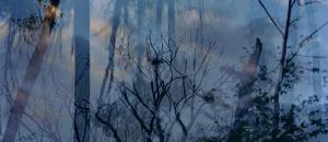 lovely, dark and deep #12 by Carolyn Monastra