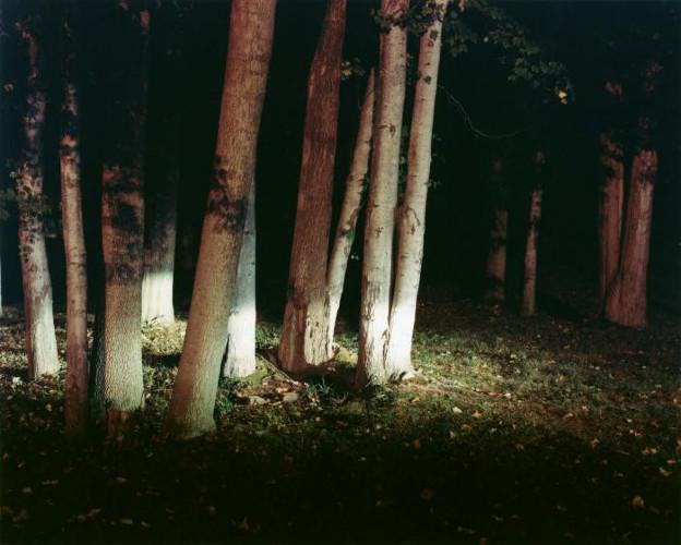 Woods by Maria Passarotti