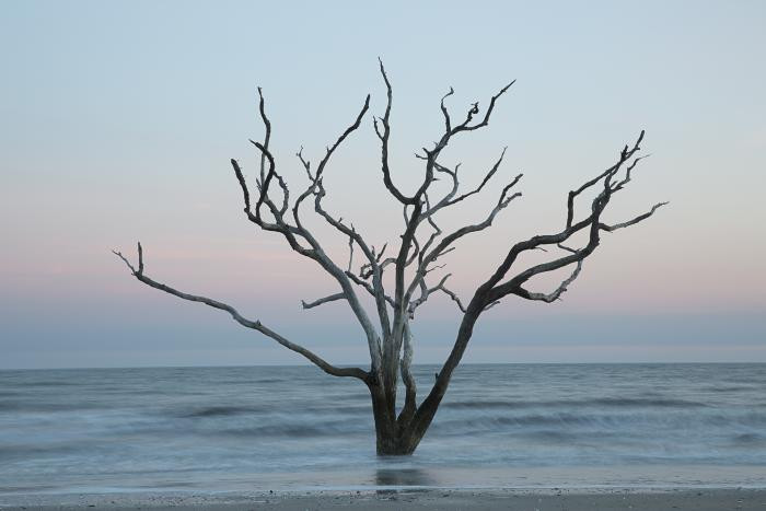 Tree in the sea #5, Botany Bay, Edisto, South Carolina by Carolyn Monastra