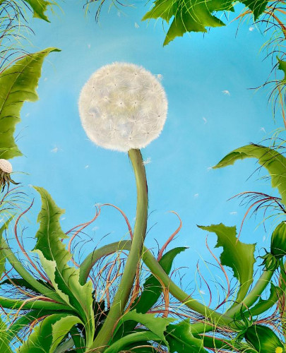 Dandelions by Allison Green