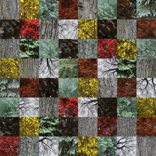 Woodland by Maria Passarotti